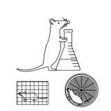 Ratón en experimentos del laboratorio Imágenes de archivo libres de regalías