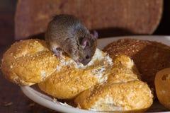 Ratón en la cocina Imagen de archivo