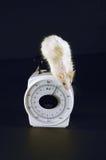 Ratón en la escala II foto de archivo