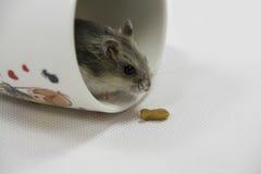 Ratón en taza Fotografía de archivo