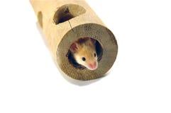 Ratón en tubo Imagenes de archivo