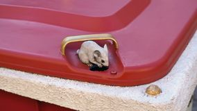 Ratón en un bote de basura adornado pero público como ornamento Foto de archivo libre de regalías