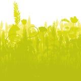 Ratón en un campo de maíz denso Imágenes de archivo libres de regalías