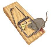 Ratón en una ratonera. Fotografía de archivo libre de regalías