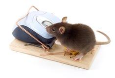 Ratón listo Imagen de archivo