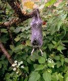 Ratón muerto Fotografía de archivo libre de regalías