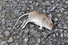 Ratón muerto Imágenes de archivo libres de regalías