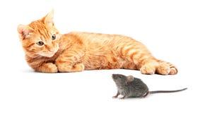 Ratón y gato Imágenes de archivo libres de regalías