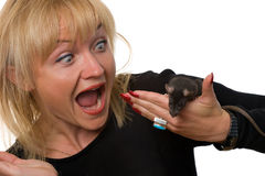 Rat!!! Stock Images