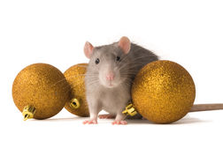 Rat. With New Year's balls on a white background Stock Photos