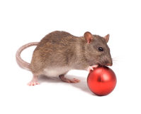 Rat. With New Year's balls on a white background Royalty Free Stock Images