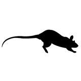 Rat. A rat race to be first Royalty Free Stock Image