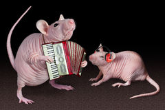Rat accordion player Stock Photos