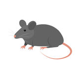 Rat animal isolated icon Royalty Free Stock Image