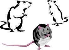 Rat. Black rat - color and black illustrations Stock Photo