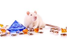 Rat blanc posant au-dessus du fond blanc images libres de droits