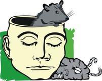 Rat in brain Stock Photos