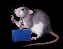 Rat Businessman Stock Image