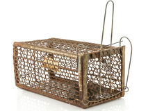 Rat cage trap Stock Image