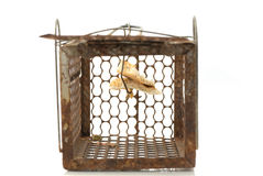Rat cage trap Royalty Free Stock Images