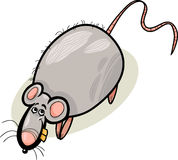 Rat cartoon character illustration Royalty Free Stock Photos