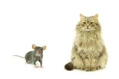 Rat and cat Royalty Free Stock Photos
