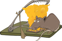 Rat cheese and a mousetrap Royalty Free Stock Photography