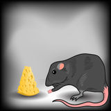 Rat and Cheese Royalty Free Stock Image