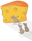 Rat with cheese. Vector illustration of a rat with cheese Stock Photos