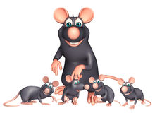 Rat Collection Stock Photos