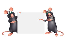 Rat Collection with white board Royalty Free Stock Photography