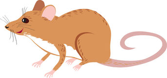 Rat. A cute brown cartoon rat Stock Photography