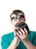 Rat dans des mains du médecin vétérinaire Images libres de droits