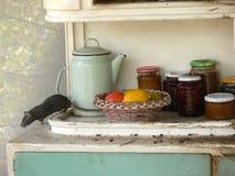 Rat dans la cuisine Image stock