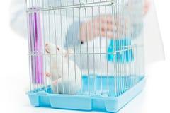Rat dans le laboratoire de chimiste photo stock