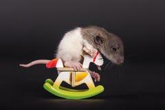 Rat de bébé sur le cheval de jouet Photo libre de droits
