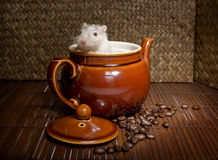 Rat de café Images stock