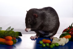 Rat deRat determines the freshness of vegetables. Royalty Free Stock Images