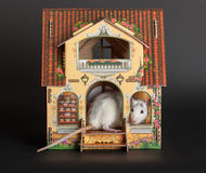 Rat in the dollhouse Stock Photos