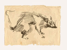 Rat drawing on old paper Stock Images