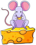 A rat eating above the big slice of cheese Royalty Free Stock Photos