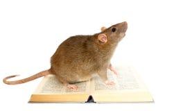 Rat en boek Royalty-vrije Stock Afbeelding