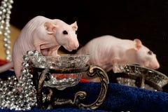 Rat et collier à la mode images stock