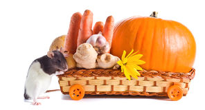 Rat et légumes Photographie stock libre de droits