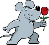 Rat Flower Stock Images