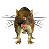 Rat from the front. 3D rendering of a rat from the front Stock Images