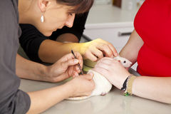 Rat getting surgery at veterinarian Stock Images