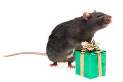 Rat and a gift Royalty Free Stock Photography
