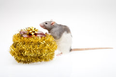 Rat and gift box Royalty Free Stock Photos