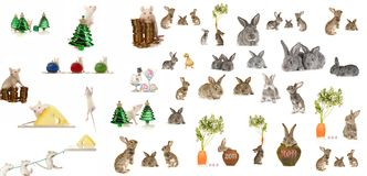 Rat and grey rabbit Royalty Free Stock Image